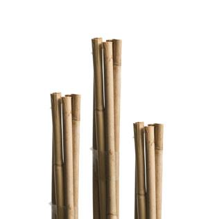 Tutore in bambù 120cm