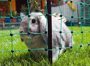 Recinzione per conigliera 25 m verde 65 cm con picchetti, conduttivo