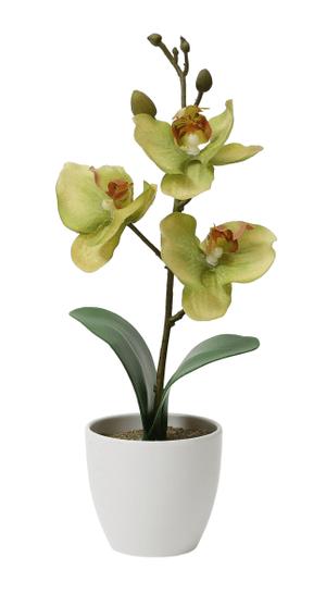 Kunstorchidee im Topf, grün