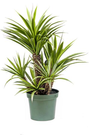 Plante grasse artificielle Star/Aloe Ferox