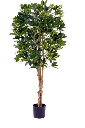 Kunstpflanze Schefflera grün-gelb