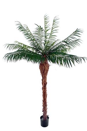 Kunstpflanze Phoenix Stamm