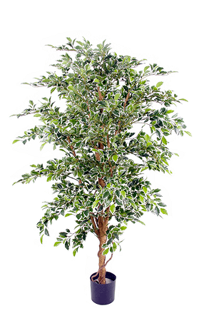 Kunstpflanze Ficus benjamina grün-weiss