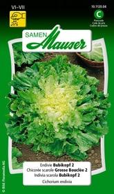 Endivie Bubikopf 2 Gemüsesamen Samen Mauser 650110101000 Inhalt 2.5 g (ca. 400 Pflanzen oder 30 m²) Bild Nr. 1