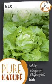 Salade pommée 'Estelle' 0.25g Semences de legumes Do it + Garden 287110700000 Photo no. 1