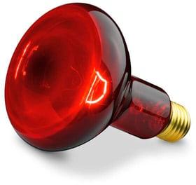 IL 11 Lampada a infrarossi Beurer 785300158511 N. figura 1