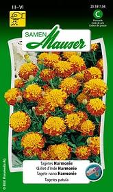 Tagetes Harmonie Blumensamen Samen Mauser 650107505000 Inhalt 1 g (ca. 80 Pflanzen oder 5 m²) Bild Nr. 1