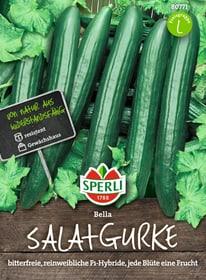 Salatgurken Bella Gemüsesamen Sperli 650180800000 Bild Nr. 1