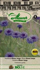 Kornblume Blauer Junge Blumensamen Samen Mauser 650245200000 Bild Nr. 1