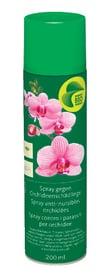 Spray anti-nuisibles pour orchidées