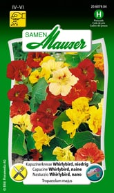 Kapuzinerkresse Whirlybird, niedrig Blumensamen Samen Mauser 650107809000 Inhalt 5 g (ca, 25 Pflanzen oder 3 m²) Bild Nr. 1