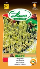 Keimsamen Mungbohnen Sprossen & Keimlinge Samen Mauser 650112701000 Inhalt 80 g Bild Nr. 1