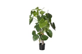 Kunstpflanze Alocasia colidora, H170cm 657351900000 Bild Nr. 1