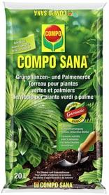 Terreau pour plantes vertes et palmiers, 20 l Terreau spécial Compo Sana 658113900000 Photo no. 1