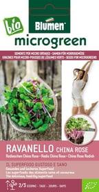 Micro ortaggi Rav. China Rose 40g Sementi di gourmet Blumen 650242700000 N. figura 1