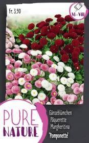 Pâquerette 'Pomponette Mix 0.1g Semences de fleurs Do it + Garden 287305000000 Photo no. 1
