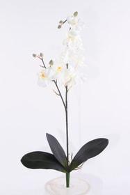 Orchidee Kunstblume 657353000000 Bild Nr. 1