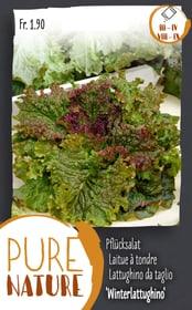 Pflücksalat 'Winterlattughino' 5g Gemüsesamen Do it + Garden 287109500000 Bild Nr. 1