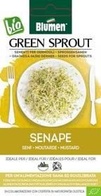 Sementi Germogli Senape 35g Sementi germogliati Blumen 650237900000 N. figura 1