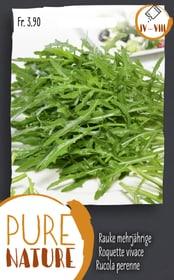Rucola perenne 2.5g Sementi di verdura Do it + Garden 287111900000 N. figura 1