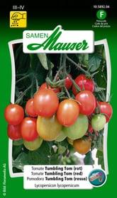 Tomate Tumbling Tom Gemüsesamen Samen Mauser 650115707000 Inhalt 20 Korn (ca. 15 Pflanzen) Bild Nr. 1