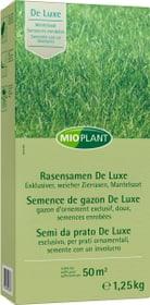 Semence de gazon De Luxe, 50 m2