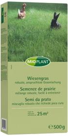 Semence de prairie, 25 m2