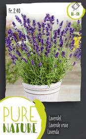 Lavendel mehrjährig 0.5g Kräutersamen Do it + Garden 287120700000 Bild Nr. 1