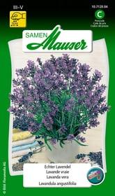 Lavande vraie Semences d'herbes arom. Samen Mauser 650112101000 Contenu 0.5 g (env. 30 plantes ou 3 - 5 m²) Photo no. 1