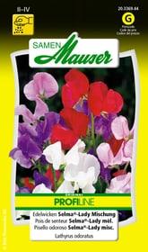 Edelwicken Selma®-Lady Mischung Blumensamen Samen Mauser 650104603000 Inhalt 5 g (ca. 40 Pflanzen oder 4 - 5 m² ) Bild Nr. 1