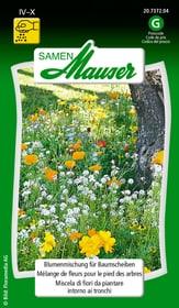 Blumenmischung für Baumscheiben Blumensamen Samen Mauser 650101603000 Inhalt 5 g (ca. 3-4 m² ) Bild Nr. 1