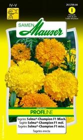 Tagetes Selma®-Champion F1 misc. Sementi di fiori Samen Mauser 650107503000 Contenuto 0.5 g (ca. 80 piante o 4 - 5 m²) N. figura 1