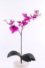 Orchidée Fleur artificielle 657353100000 Photo no. 1