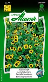 Sanvitalia tappezzante Sementi di fiori Samen Mauser 650107101000 Contenuto 0.5 g (ca. 100 piante o 5 - 6 m²) N. figura 1