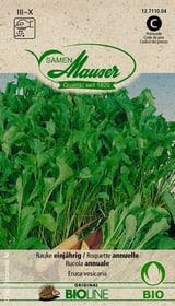 Rauke einjährig Gemüsesamen Samen Mauser 650158100000 Bild Nr. 1