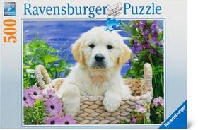 Golden Retriever 500 Puzzle Ravensburger 748981400000 Bild Nr. 1