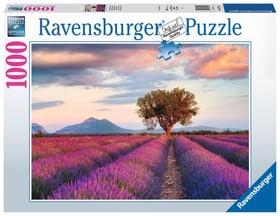 Champ de Lavande 1000 P. Puzzles Ravensburger 748675900000 Photo no. 1