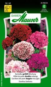 Oeillet de poète double mélange Semences de fleurs Samen Mauser 650103103000 Contenu 0.5 g (env. 50 plantes ou 3 - 4 m²) Photo no. 1