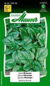 Spinat Monnopa Gemüsesamen Samen Mauser 650115201000 Inhalt 25 g (ca. 2  m²) Bild Nr. 1