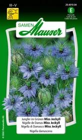 Jungfer im Grünen Miss Jeckyll Blumensamen Samen Mauser 650105801000 Inhalt 2.5 g (ca. 200 Pflanzen oder 8 m²) Bild Nr. 1