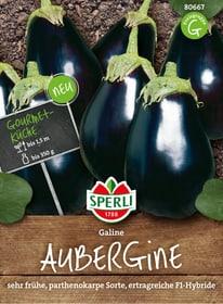 Aubergine Galine Semences de legumes Sperli 650199600000 Photo no. 1