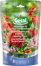 Cônes d'engrais pour géraniums et plantes à fleurs, 30 p Bâtonnets d'engrais Compo Gesal 658309400000 Photo no. 1