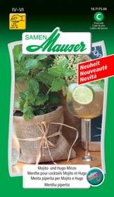 Minze für Cocktail Mojito und Hugo Gemüsesamen Samen Mauser 650157100000 Bild Nr. 1