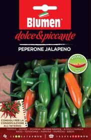 Pepe jalapeno Sementi di verdura Blumen 650163600000 N. figura 1