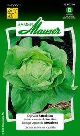 Kopfsalat Attraktion Gemüsesamen Samen Mauser 650111501000 Inhalt 2.5 g (ca. 1000 Pflanzen oder 10 m² ) Bild Nr. 1