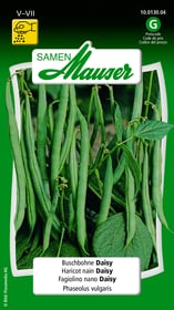 Buschbohne Daisy Gemüsesamen Samen Mauser 650109301000 Inhalt 80 g (ca. 8 m²) Bild Nr. 1