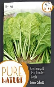Bette à tondre 'Vert à la coupe' 10g Semences de legumes Do it + Garden 287112700000 Photo no. 1