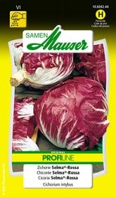 Zichorie Selma®-Rossa Gemüsesamen Samen Mauser 650116404000 Inhalt 1.5 g (6 - 8m² Direktsaat,  20 - 30 m² gepflanzt) Bild Nr. 1