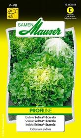Endivie Selma®-Scarola Gemüsesamen Samen Mauser 650110104000 Inhalt 1 g (ca. 250 Pflanzen oder 8 - 20 m² ) Bild Nr. 1