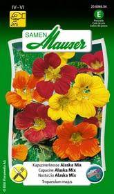 Nasturzio Alaska Mix Sementi di fiori Samen Mauser 650107801000 Contenuto 3 g (ca. 25 piante o 3 m²) N. figura 1